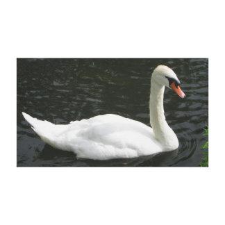White Swan On The River Avon Canvas Print