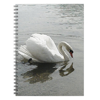 White swan, reflecting in the grey water spiral notebook