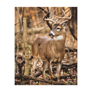 White Tail Deer Buck Canvas Print
