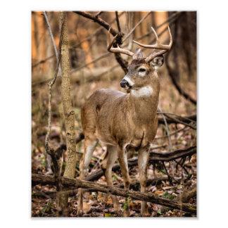White Tail Deer Buck Photo Print