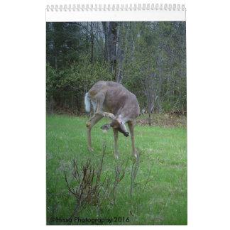 White tail Deer Calander Calendar