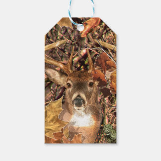 White Tail Deer Head Fall Energy Spirited on a Gift Tags
