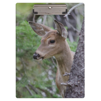 White Tail Deer Portrait Fishercap Lake Clipboard