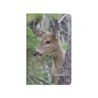 White Tail Deer Portrait Fishercap Lake Journal