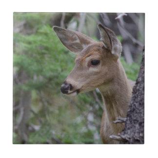 White Tail Deer Portrait Fishercap Lake Tile