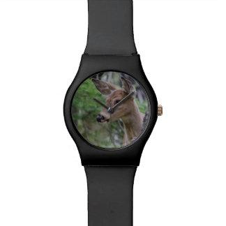 White Tail Deer Portrait Fishercap Lake Watch