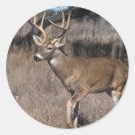 White Tail Deer Round Sticker