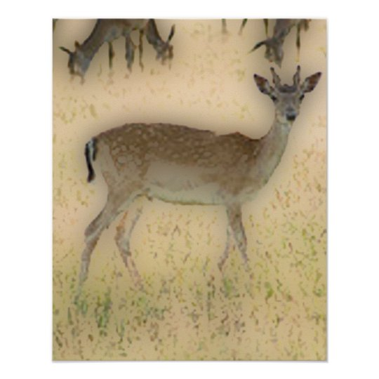 'White-tail Grazing' Poster