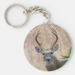 White-tailed Buck Basic Round Button Key Ring