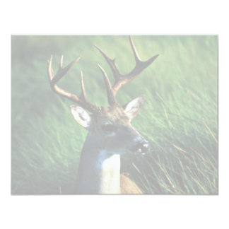 White-tailed Buck Card