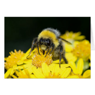 White-tailed Bumblebee Card