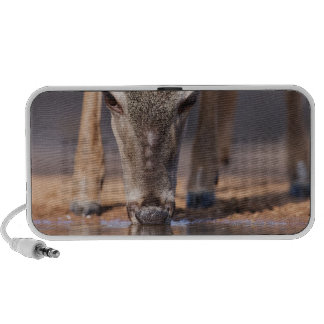 White tailed deer at waterhole travel speakers