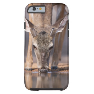 White tailed deer at waterhole tough iPhone 6 case