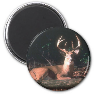 White Tailed Deer  Buck 6 Cm Round Magnet
