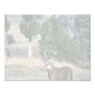 White-tailed deer buck invitation