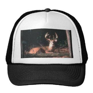 White Tailed Deer Buck Photo Cap