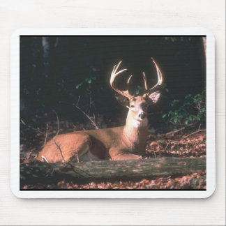 White Tailed Deer Buck Photo Mouse Mat