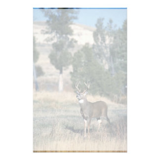 White-tailed deer buck stationery