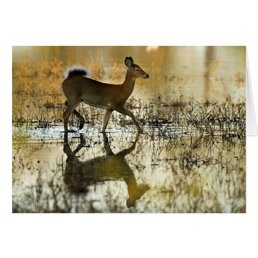 White-tailed deer cards