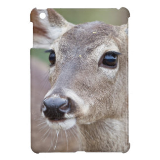 White-tailed Deer doe drinking water iPad Mini Covers