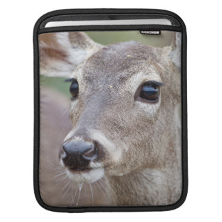 White-tailed Deer doe drinking water iPad Sleeve