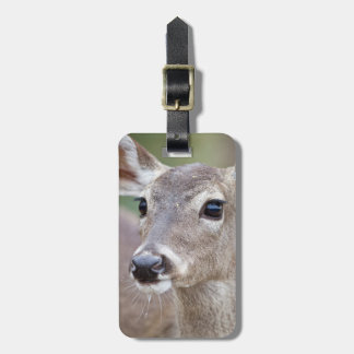 White-tailed Deer doe drinking water Luggage Tag