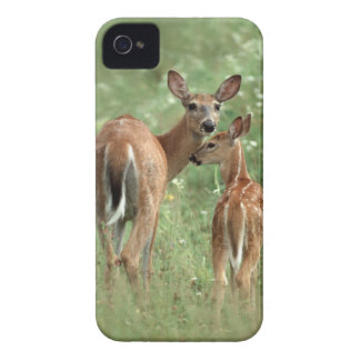 White-Tailed Deer Doe with Her Fawn - Baby Animals iPhone 4 Case-Mate Case