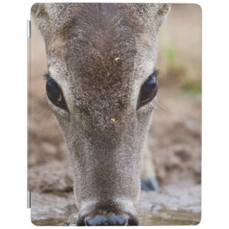 White-tailed Deer drinking water iPad Cover