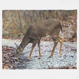 White-Tailed Deer Eating Fleece Blanket