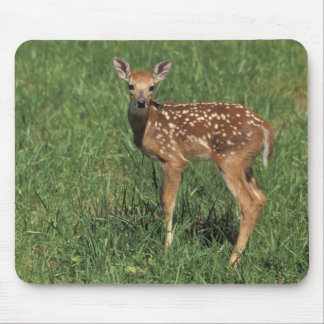 White-tailed deer fawn mouse mat