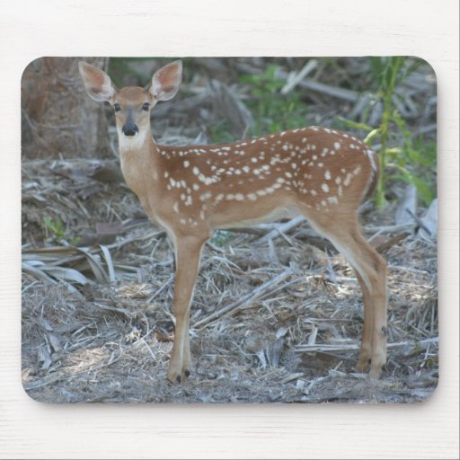 White-Tailed Deer Fawn Mousepads