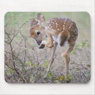 White-tailed Deer Fawn - Odocoileus virginianus Mouse Pad