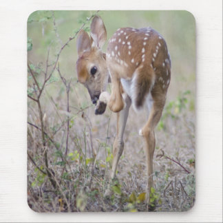 White-tailed Deer Fawn  - Odocoileus virginianus Mouse Pad