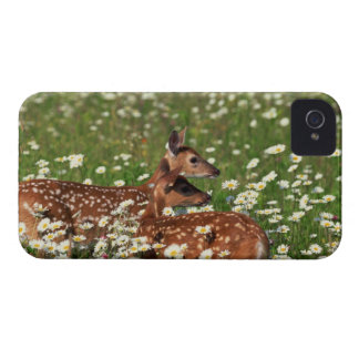 White-tailed deer fawns iPhone 4 case