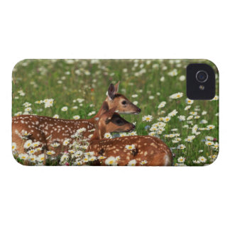 White-tailed deer fawns iPhone 4 Case-Mate case