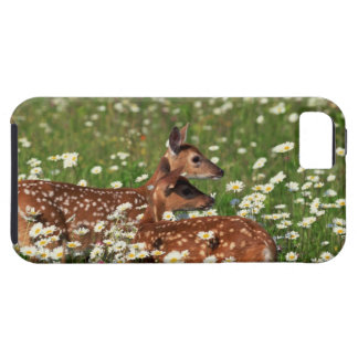White-tailed deer fawns iPhone 5 cover
