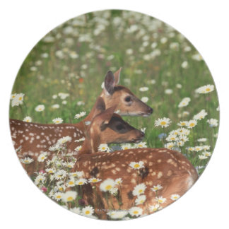 White-tailed deer fawns plate