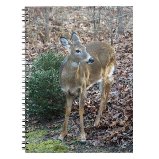 White-Tailed Deer Notepad Notebook