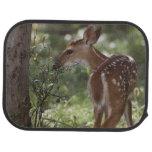 White-tailed Deer, Odocoileus virginianus, 2