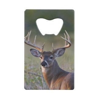 white-tailed deer Odocoileus virginianus) 2