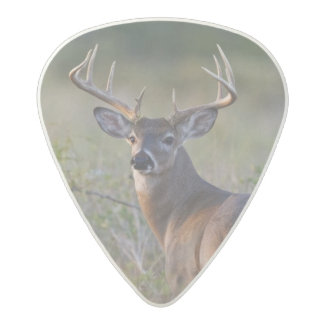 white-tailed deer Odocoileus virginianus) 2 Acetal Guitar Pick