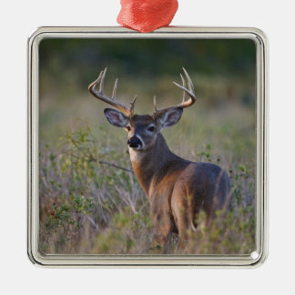 white-tailed deer Odocoileus virginianus) 2 Christmas Ornament