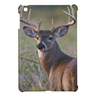 white-tailed deer Odocoileus virginianus) 2 Cover For The iPad Mini