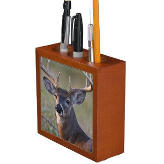 white-tailed deer Odocoileus virginianus) 2 Desk Organiser