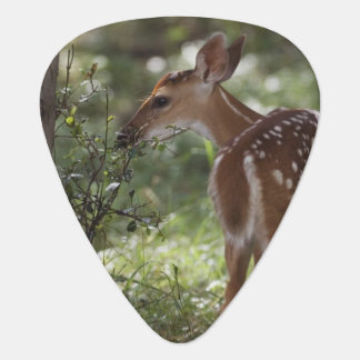 White-tailed Deer, Odocoileus virginianus, 2 Guitar Pick