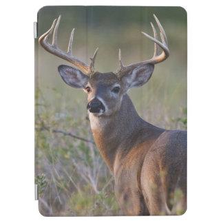 white-tailed deer Odocoileus virginianus) 2 iPad Air Cover
