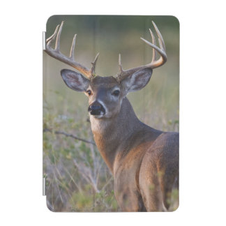 white-tailed deer Odocoileus virginianus) 2 iPad Mini Cover