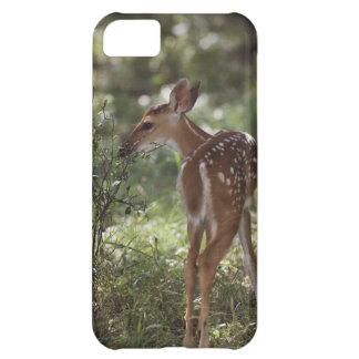 White-tailed Deer, Odocoileus virginianus, 2 iPhone 5C Case