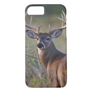 white-tailed deer Odocoileus virginianus) 2 iPhone 8/7 Case
