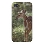 White-tailed Deer, Odocoileus virginianus, 2 Case For The iPhone 4
